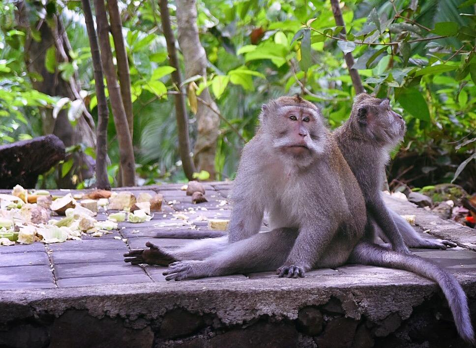 Schon schön so ein Affenleben