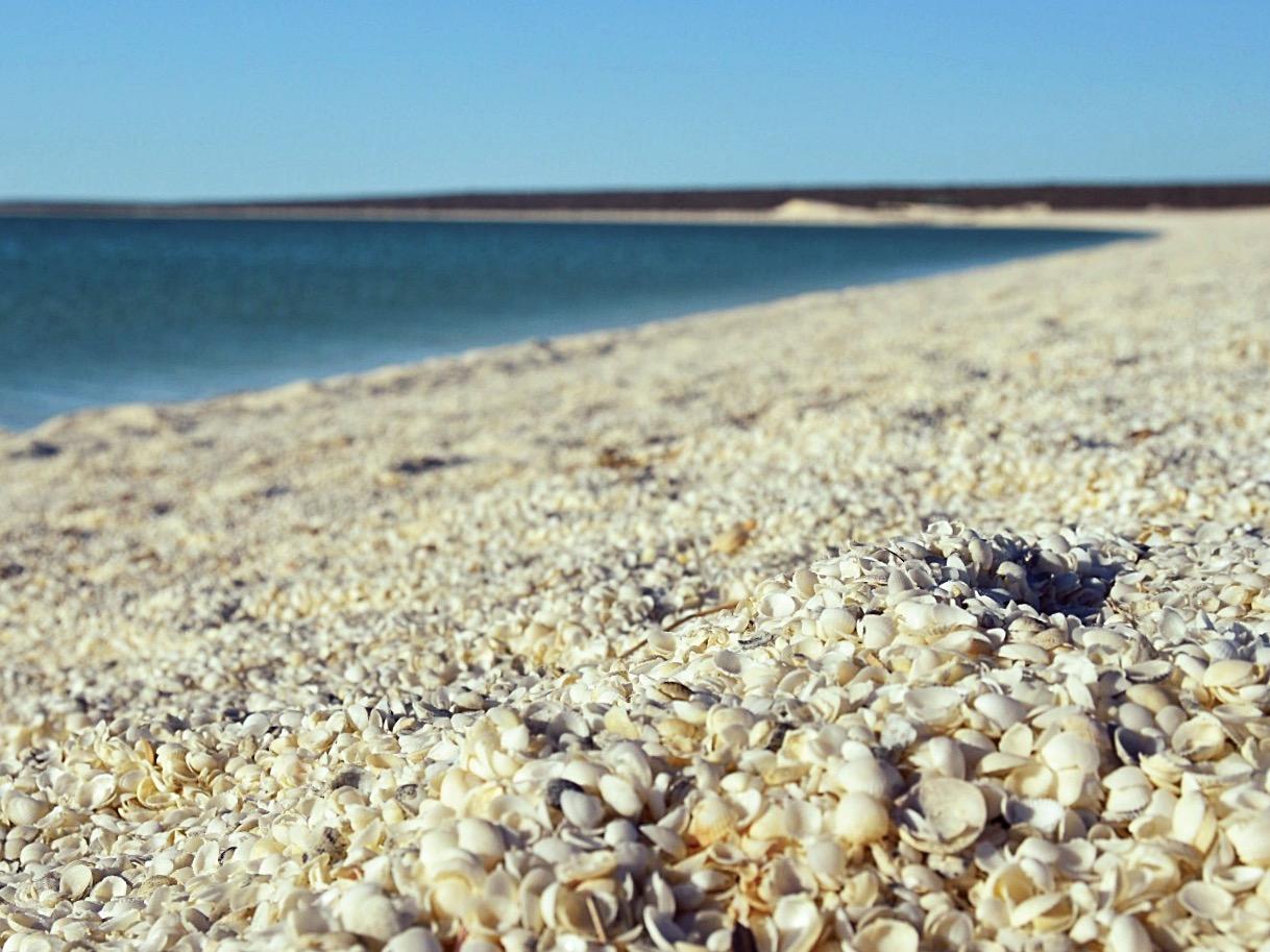 Muscheln statt Sand